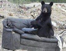 положение тела на диване